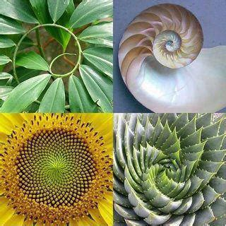The Fibonacci Sequence can be found all over in nature!,