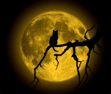 Wild Animals In Front of Full Moon by Mario Moreno